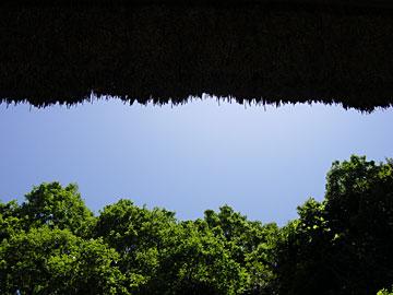 空と木と軒裏