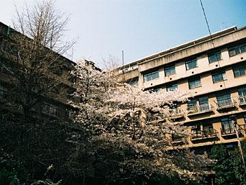 江戸川アパート1号棟外観