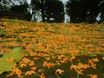 20051011-autumn02.jpg