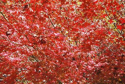 20051226-red.jpg
