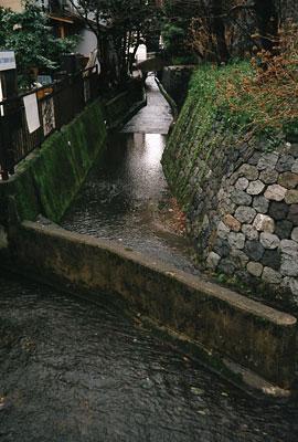 20060306-water_root.jpg
