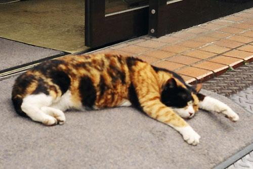 20060627-cat.jpg