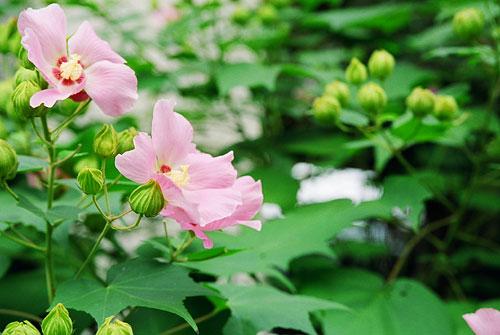 20060917-flower.jpg