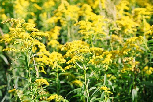 20060919-yellow03.jpg