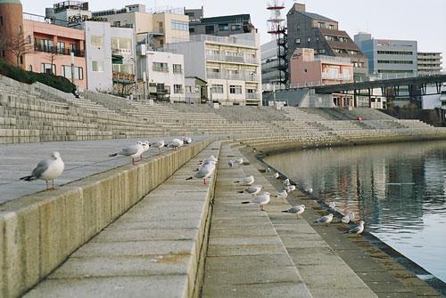 20070110-bird02.jpg