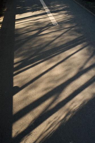 20070220-random_stripe.jpg