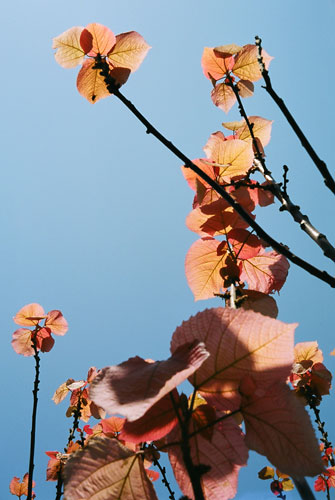 20070504-pink_light.jpg