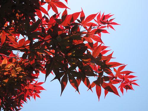 20070529-red03.jpg