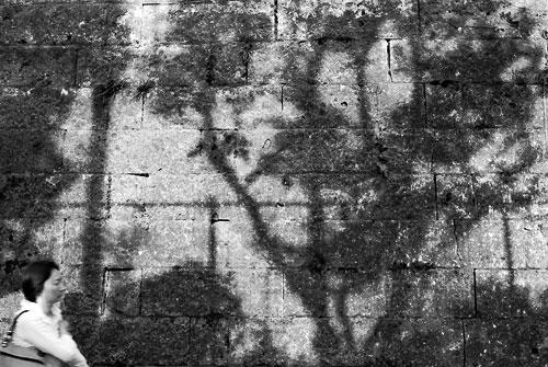 20071127-silhouette05.jpg