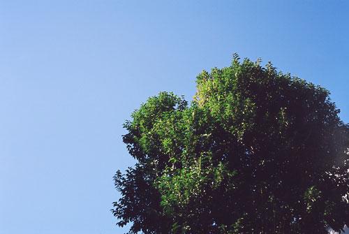 20071210-tree.jpg