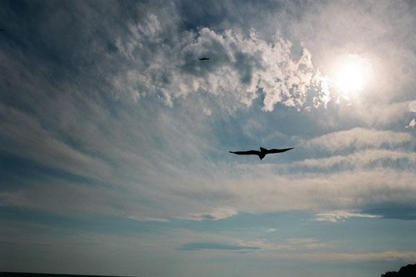20080313-gliding.jpg