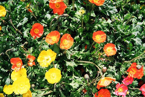 20080412-flower04.jpg