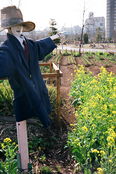 20080419-scarecrow.jpg