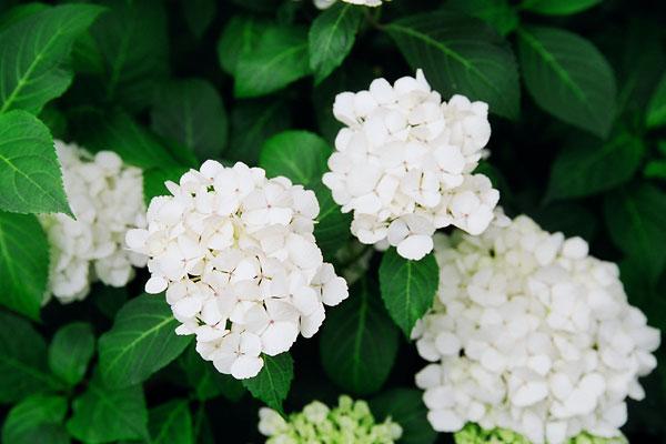 20080610-white03.jpg