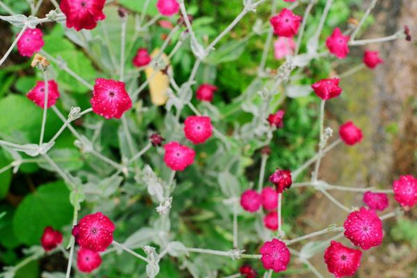20080614-red-green.jpg