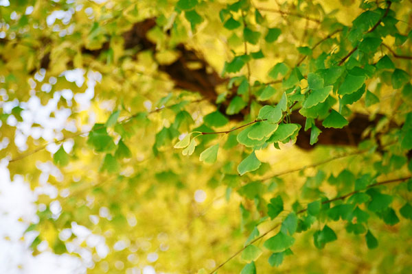 20081212-green_yellow.jpg