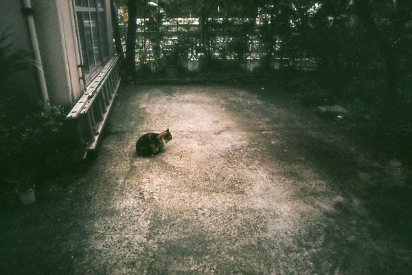 20090202-cat02.jpg