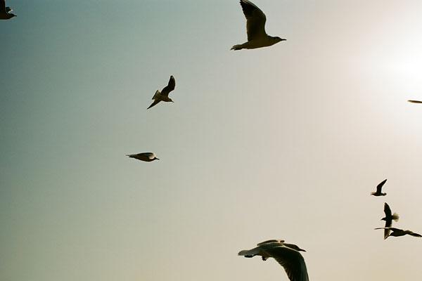 20090331-fly.jpg