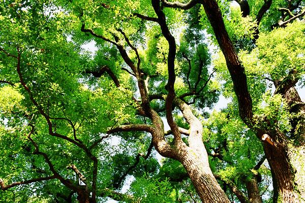 20090407-green02.jpg
