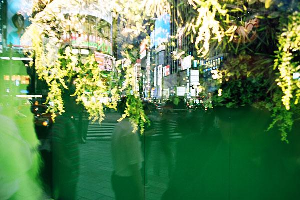 20090629-green05.jpg