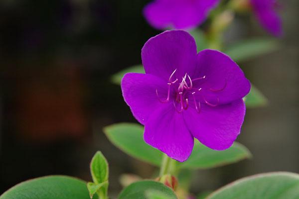 20090920-purple02.jpg