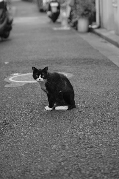 20090921-cat03.jpg