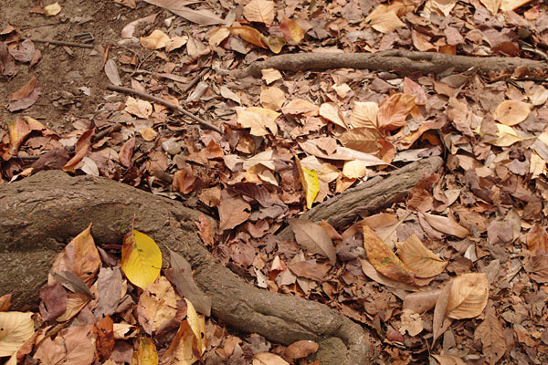 20090928-color_of_autumn01.jpg