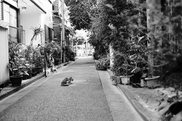 20091023-alley03.jpg