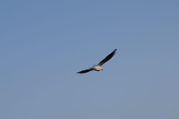 20091113-gliding01.jpg