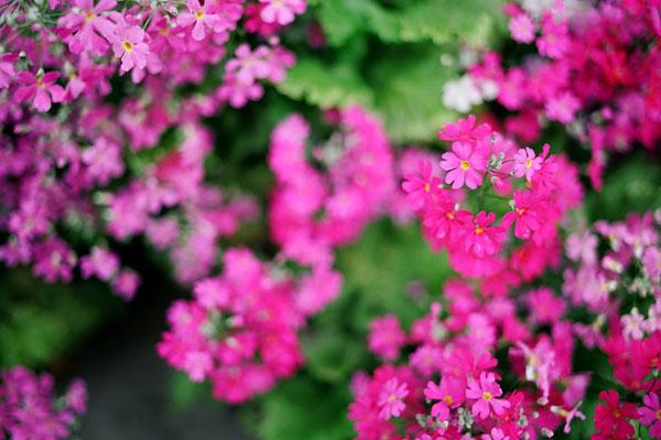 20100408-pink05.jpg
