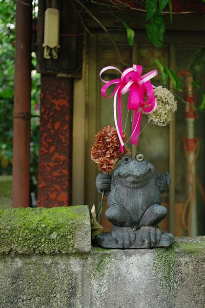 20100531-frog01.jpg