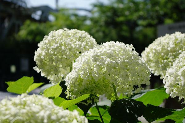 20100615-green06.jpg