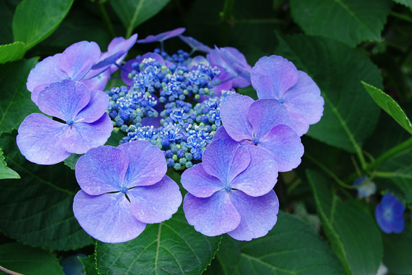 20100620-purple03.jpg