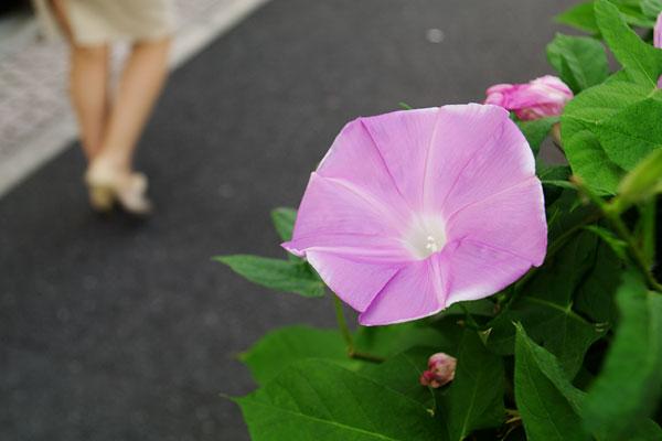 20100923-end_of_summer.jpg