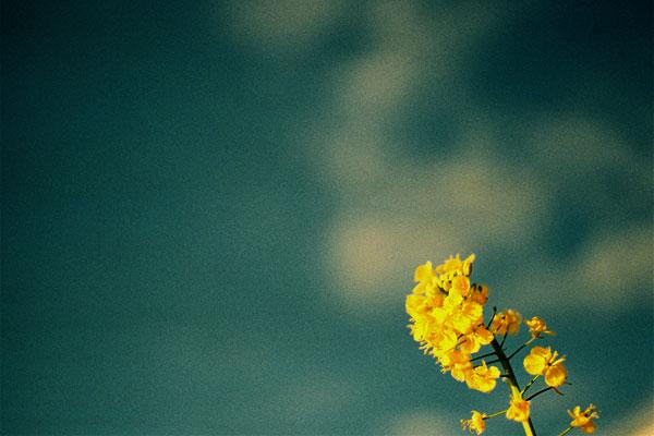 20110204-yellow08.jpg