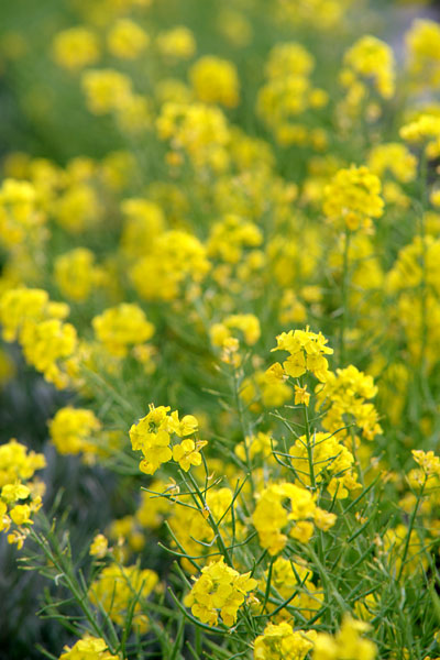 20110418-yellow09.jpg